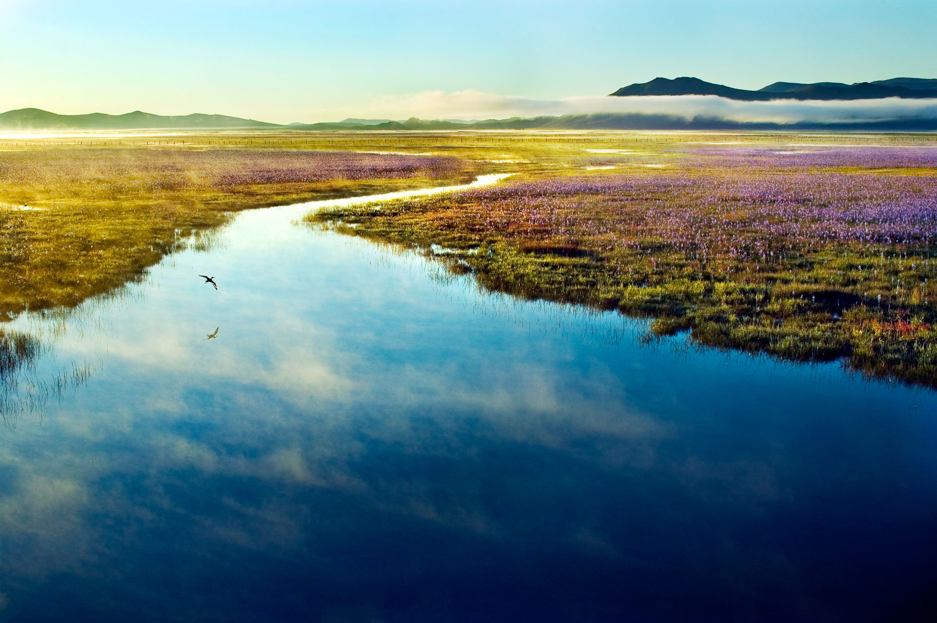 landscape of Camas Marsh, Idaho