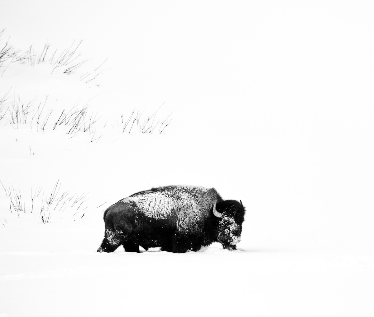 20110121_Yellowstone_0033BW